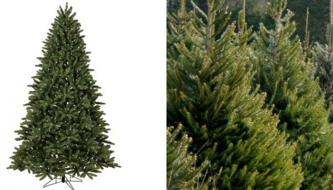 The Christmas Tree Dilemma: Rent, Real Or Fake?