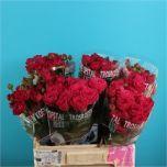 Rose spray Scented Air! #Wholesale #Flowers #Spray #Roses #Wedding