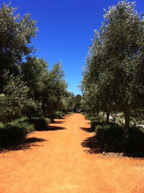 Olive Walk in the Babylonstoren kitchen garden. http://www.babylonstoren.com/