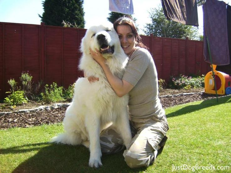 ... Great Pyrenees | Pinterest | Pyrenees, Great Pyrenees and Dog Breeds