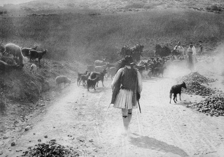 Sparte, troupeau de chevres, δεκαετία 1900