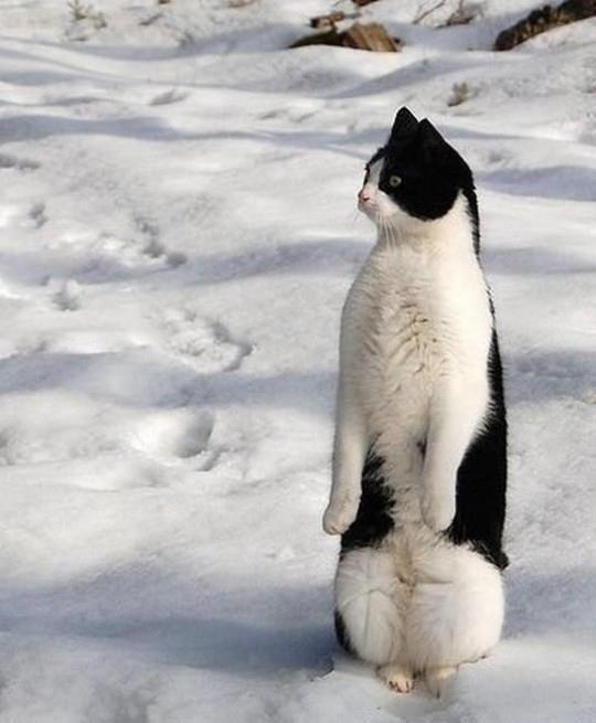 Não sou um gato, sou um pinguim!