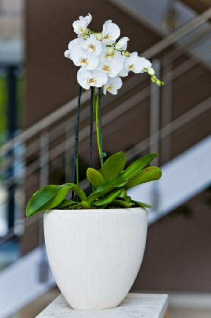 joli moyen de decoration avec orchidee d'interieur blanche