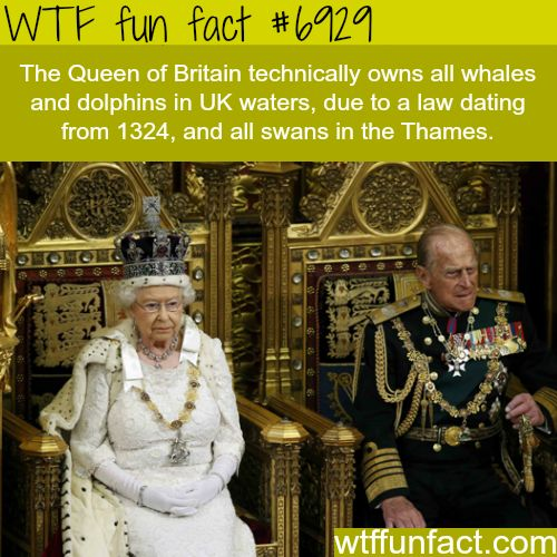 Queen Elizabeth II - WTF fun fact➕More Pins Like This At FOSTERGINGER @ Pinterest ➖ ✖️