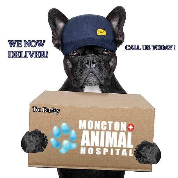 Call us today to schedule your pet food delivery! 857-4271 for more information! #delivery #petfood #petfooddelivery #vet #veterinarian #veterinarytechnician #vettech #vettechs #fooddelivery