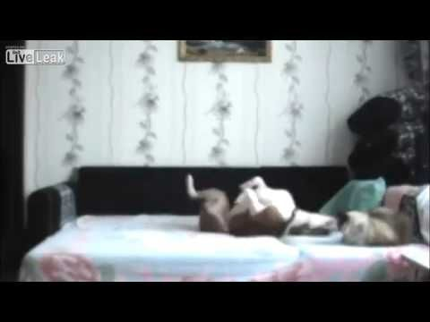 Dog Not Allowed On The Bed - YouTube