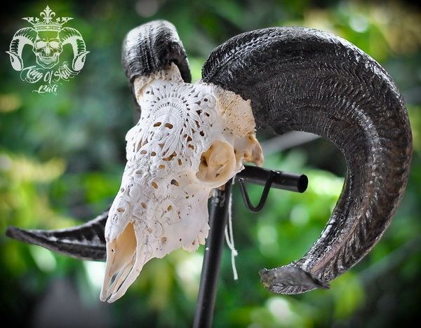 Hand Carved Ram Skull with Indian Skulls Patterns Great Taxidermy Oddities For Home Decor