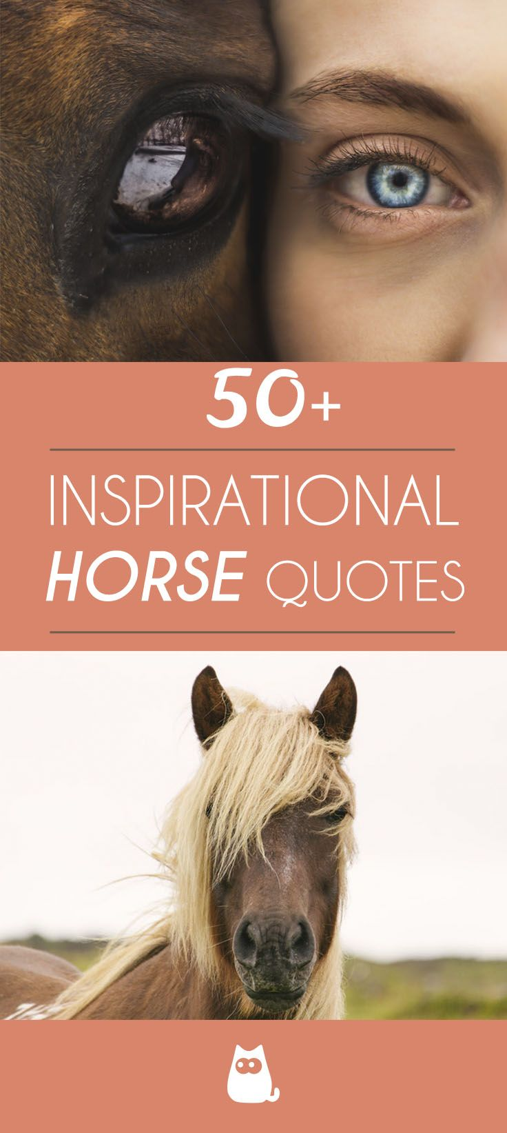 Inspirational Horse Quotes Over 50 Inspirational Horse Quotes Horse Quotes Horse Quotes Funny
