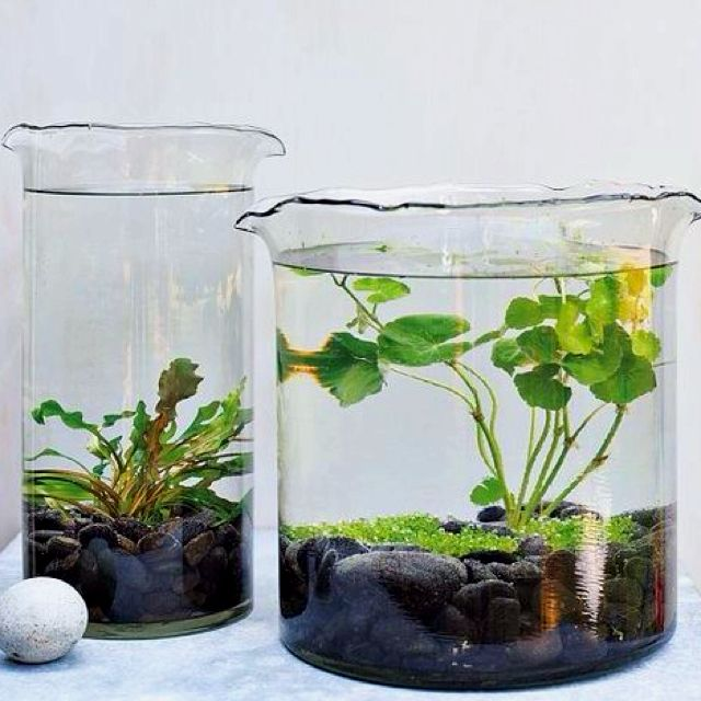 Water plant terrariums...add fighter fish