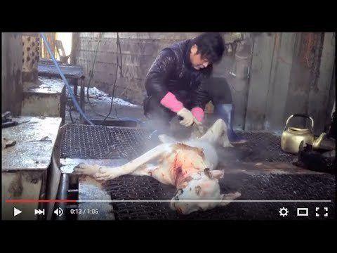 Tell Sister City, Anyang,Korea, That We're Opposed to Torture/Consumption of Dogs and Cats - horrible