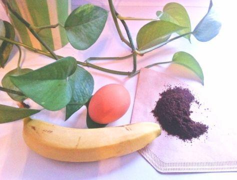 Pflanzen wiederbeleben mit selbst gemachtem Dünger | Frag Mutti