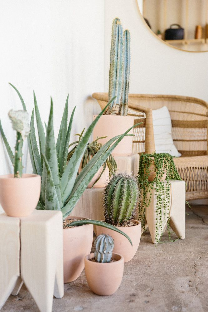 cactus corner at Midland Shop
