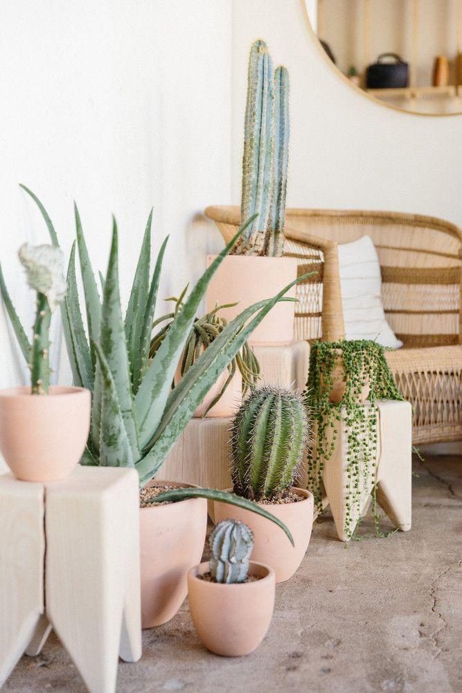 cactus corner at Midland Shop