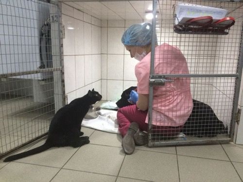 Paralysed Rescue Cat Becomes Nurse to Sick Animals - We Love Cats and Kittens