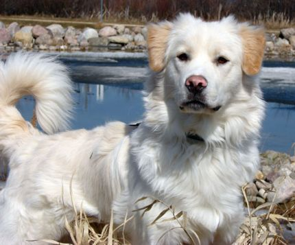 What is My Dog Saying? NEW CLASS! Understanding Canine Communication