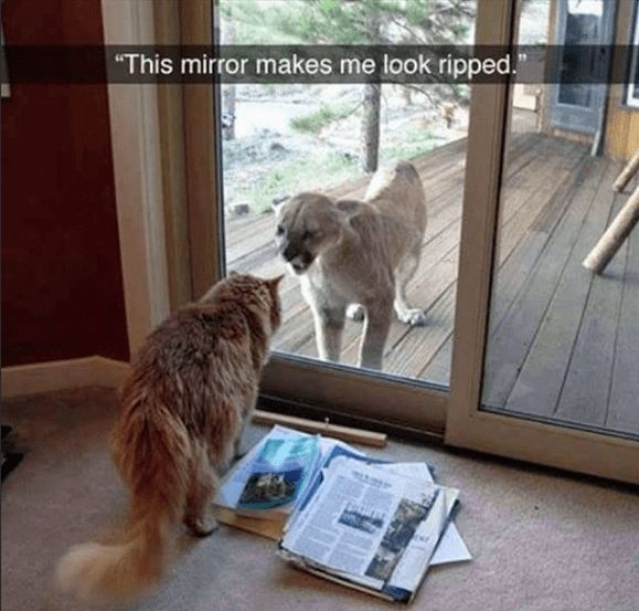 42 Hilarious Animal Memes That Are So Cute You're Gonna Die #CuteAnimals #DogMemes #CatMemes FUNNY PICTURES ANIMALS