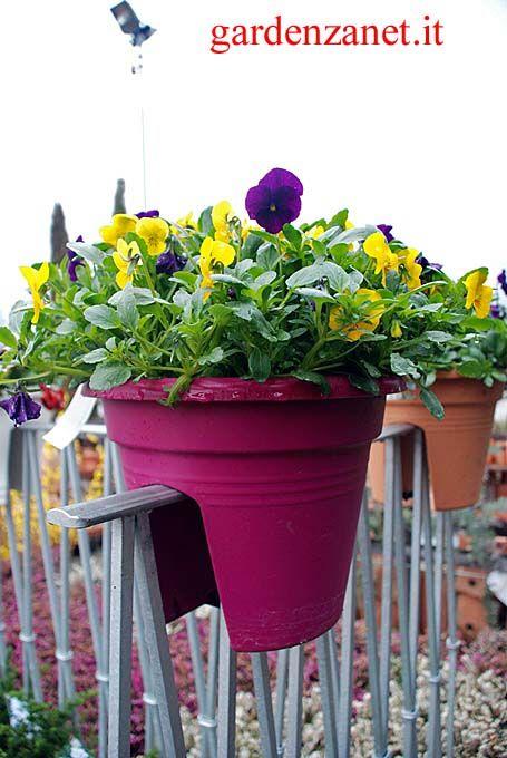 viole pendule in vaso bridge