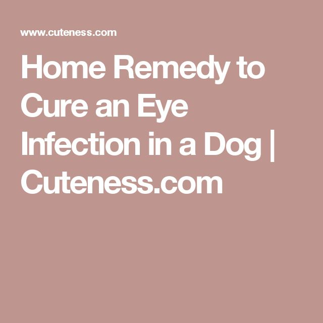 Home Remedy to Cure an Eye Infection in a Dog | Cuteness.com