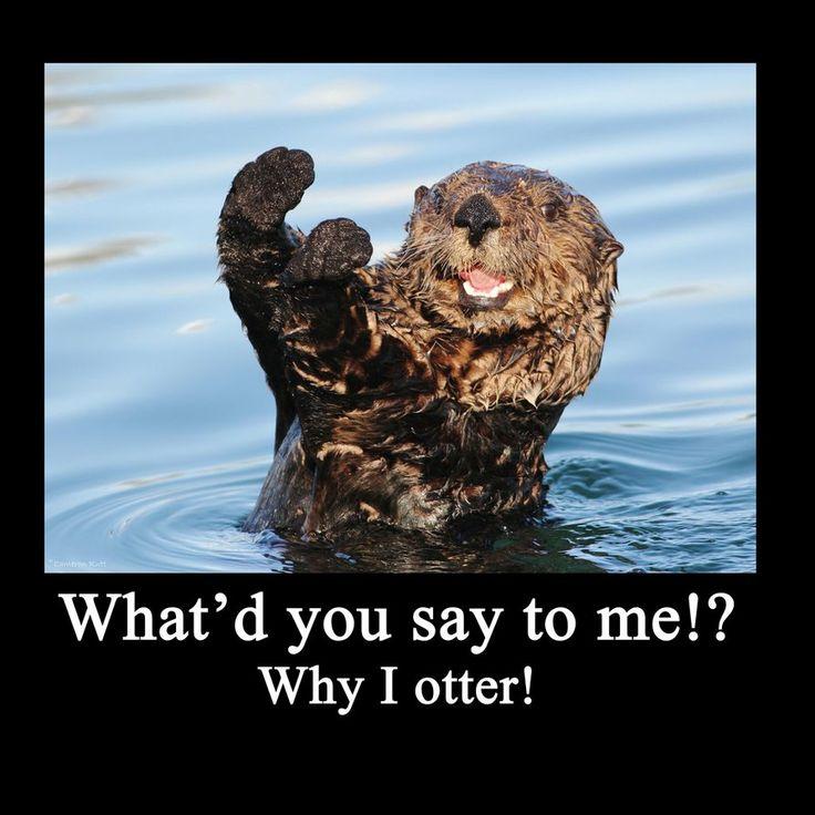 Funny Otter | Pin it Like 1 Website