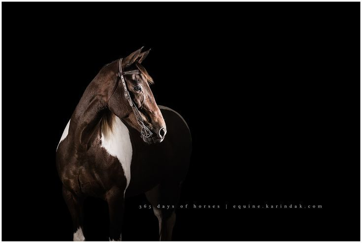 365 Days Of Horses With Images Black Background Portrait