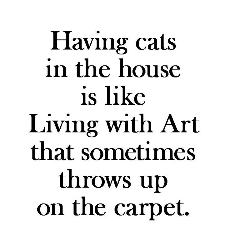 Having cats in the house is like Living with Art that sometimes throws up on the carpet.