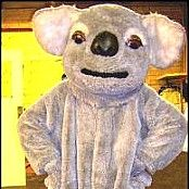 Our beautiful Koala costume for Hire. Call us to book on 9670 1765