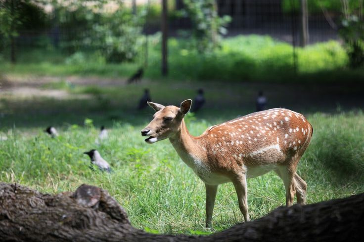 A deer in the mini zoo.