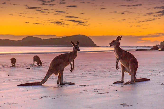 Cape Hillsborough | The most beautiful beaches in Queensland