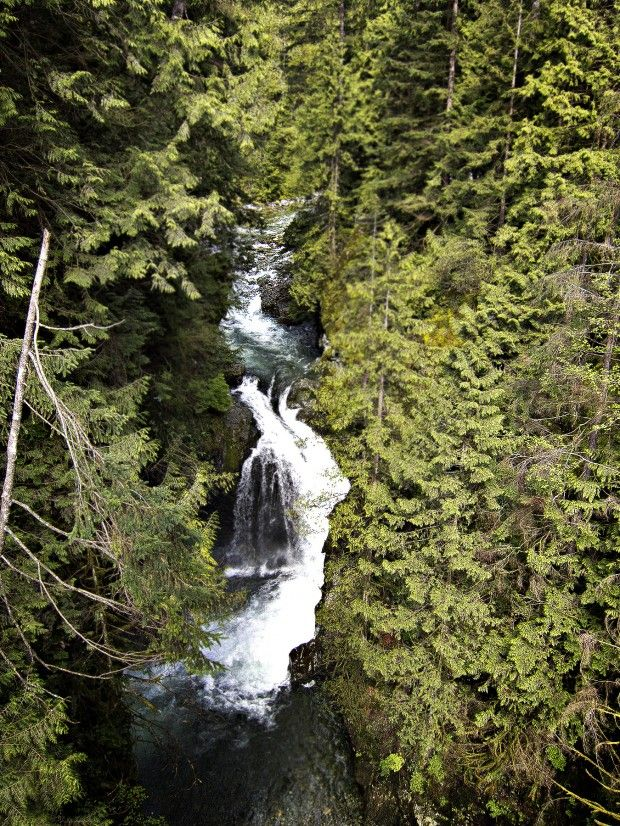 Lynn Canyon - a definite place to visit!