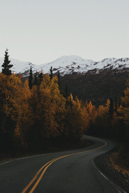 mountain and forest fall road