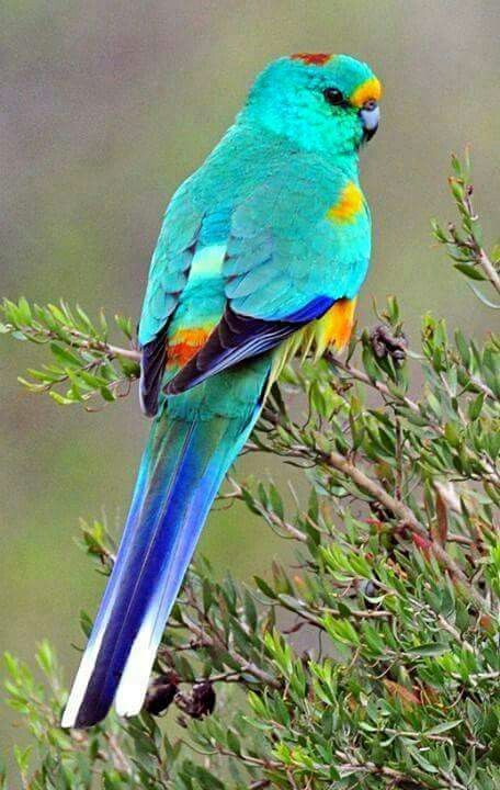 「綺麗な鳥たち 鮮やかな羽」おしゃれまとめの人気アイデア ...