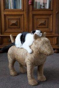 BEST cat scratching post ever!