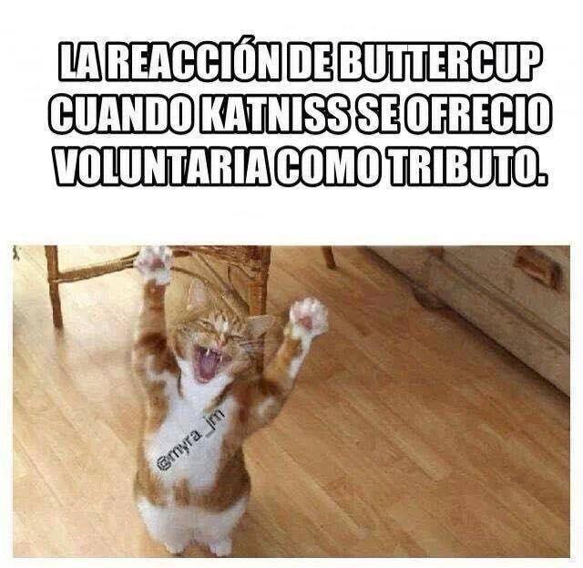 Leer Memes THG - Buttercup - Wattpad