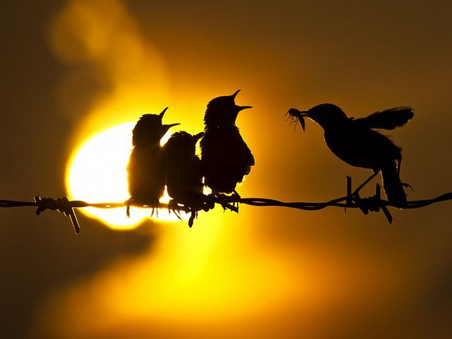 Silhouette | Flickr - Photo Sharing!