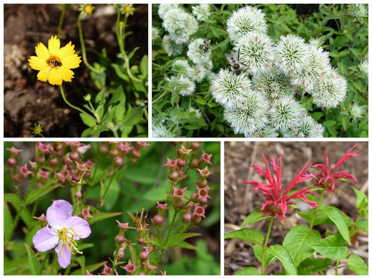 68 best native plants for virginia gardening images on pinterest