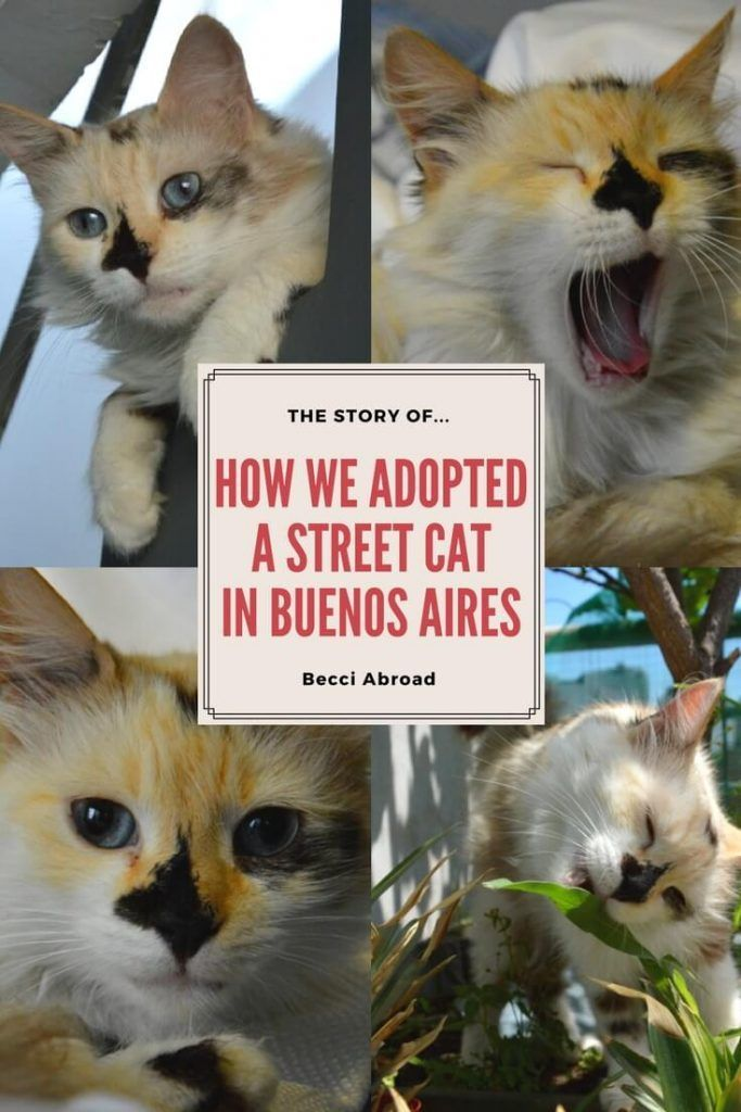 How to adopt a street cat in Buenos Aires, Argentina. Full story and photos: http://www.traveling-cats.com/2018/02/cat-from-buenos-aires-argentina.html (street cats Buenos Aires, stray cats Buenos Aires, homeless cats, feral cats, cat adoption, adopt don't shop)