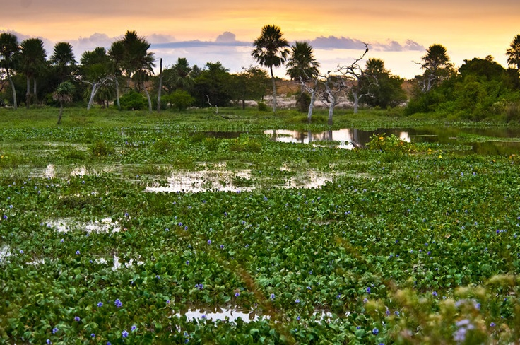 Explore the Ibera Wetlands by boat, best known for its brilliant bird watching but keep an eye out for alligators too.
