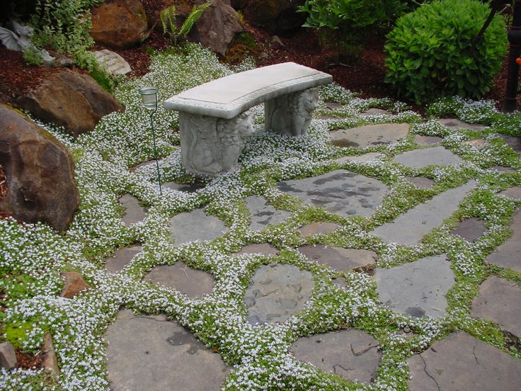 23 best midwest ground cover images on pinterest | garden ideas ... - Patio Ground Cover Ideas