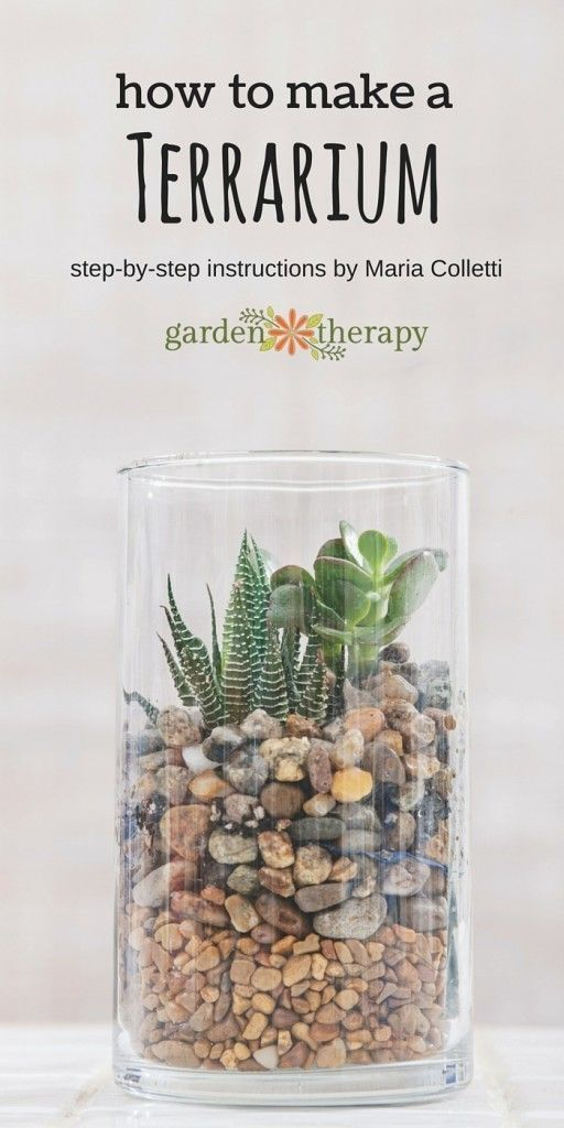 How to make a terrarium.  Once you have this basic design down, it gives the you the opportunity to interpret a terrarium garden many times over and to with your own vision. The colors of the stones can be changed, the succulents used are easy enough to b