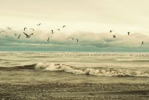seagulls : Birds Flying, Beaches Photo, Color, The Ocean, Pretty Things, Ocean Waves, The Waves, Popular Pin, The Sea