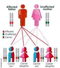 List of Genetic Diseases and Disorders