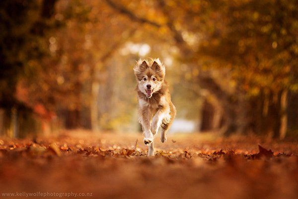 6 Tips for Photographing Dogs in Action - http://www.becomingaphotographer.net/1230/6-tips-for-photographing-dogs-in-action/ #PhotographyTipsAndTutorials