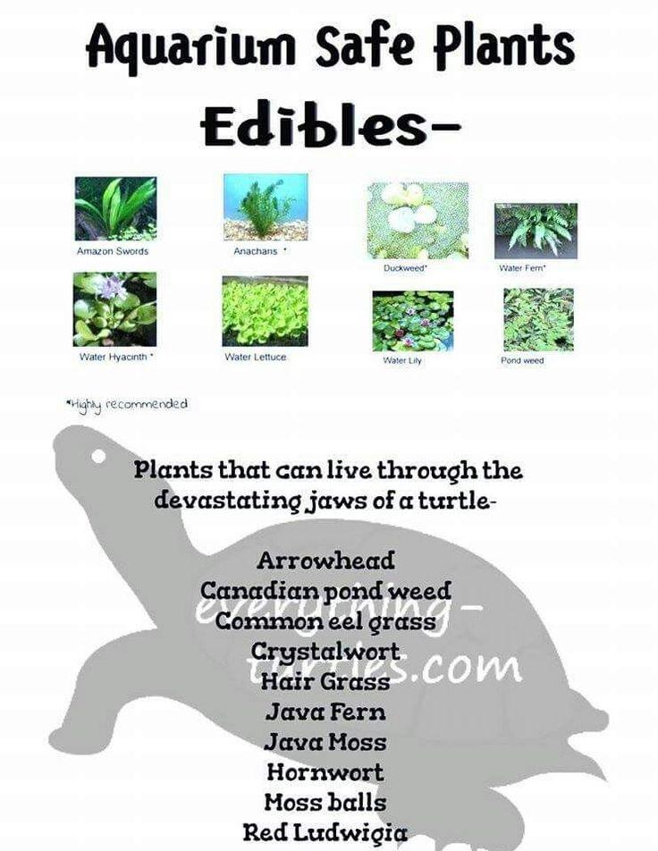 51 best turtle babies setup images on pinterest for Pond friendly plants