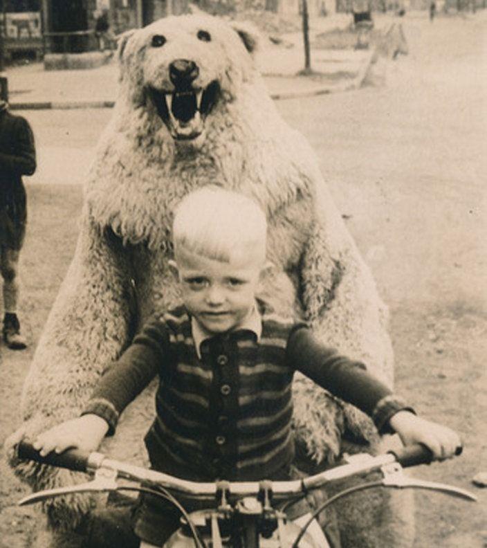 12 besten Foto-Eisbären Bilder auf Pinterest | Verkleiden, Drei und ...