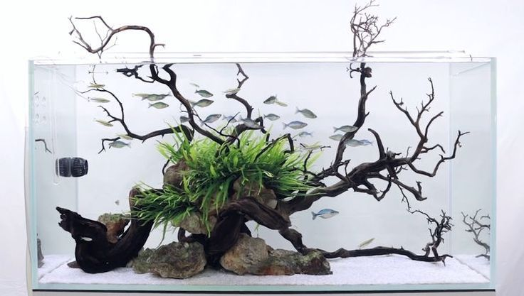 inspiration tank www.ibrio.it your aquarium born here ! il tuo acquario nasce qui ! https://www.facebook.com/ibrio.it via web #ibrio #acquario #acquari #acquariologia #acquariofilia #aquarium #aquariums #piante #natura #pesci #zen #design #arredamento #layout #layouts #layoutdesign #moss #freshwater #plantedtank #tropicalfish #fishofinstagram #aquaticplants #natureaquarium #nanotank #aquascaping