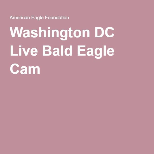 Washington DC Live Bald Eagle Cam