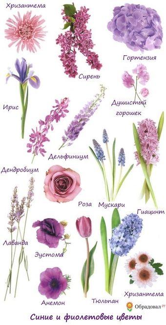 Фиолетовый свадебный букет невесты (Obradoval.ru) - фото 00