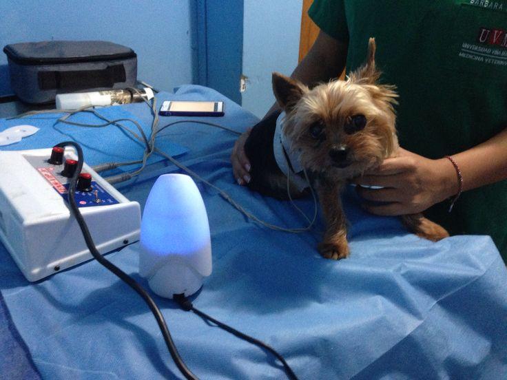 Aromaterapia en el tratamiento del dolor