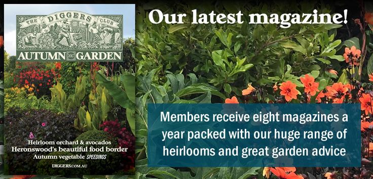 Plants Online And Seeds Online - Vegetables, Herbs, Flowers, Trees | The Diggers Club