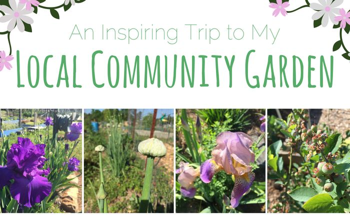 An Inspiring Trip to My Local Community Garden
